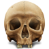 72x72px size png icon of Skull