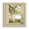 96x96px size png icon of Picture