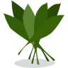 96x96px size png icon of greens