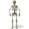 96x96px size png icon of Standing skeleton