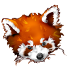 96x96px size png icon of Firefox panda red