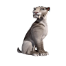 96x96px size png icon of Shira