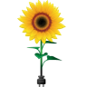 96x96px size png icon of sunflower