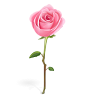 96x96px size png icon of rose