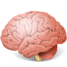 96x96px size png icon of Body Brain