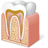 96x96px size png icon of Body Tooth Anatomy