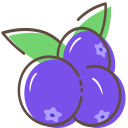 Blueberry Icon