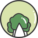 Chinese cabbage -01 Icon