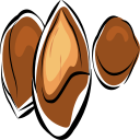 apricot kernel Icon