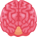 Frontal brain Icon