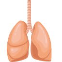 Lung and bronchus Icon