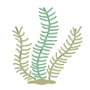 Linear seaweed Icon