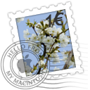 Blooming Cherries Icon