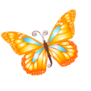 Butterfly orange Icon